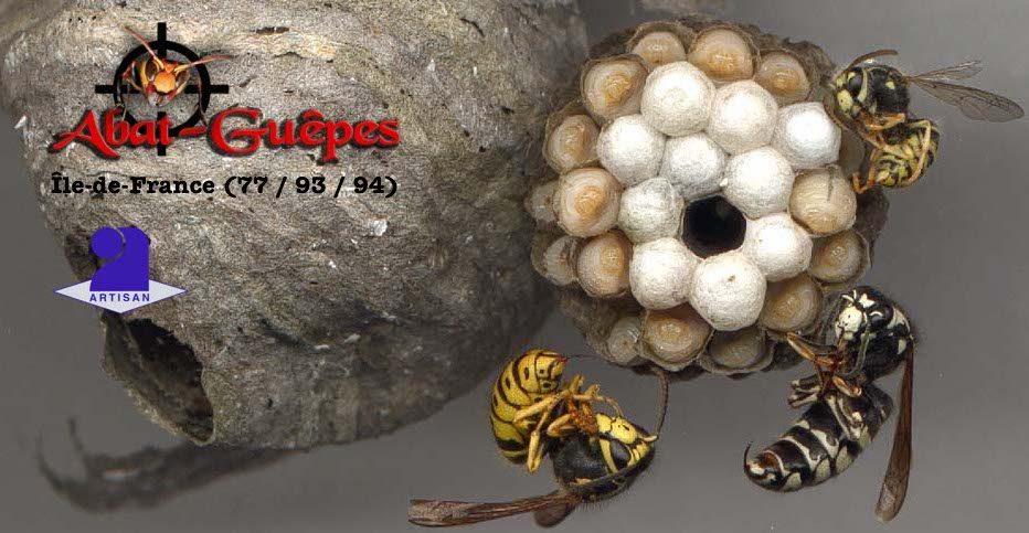 Destruction de nids de guêpes à partir de 75 €